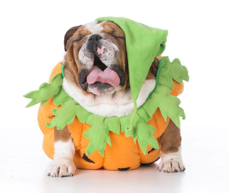Fun Halloween Costumes That Work with Braces – Comfort